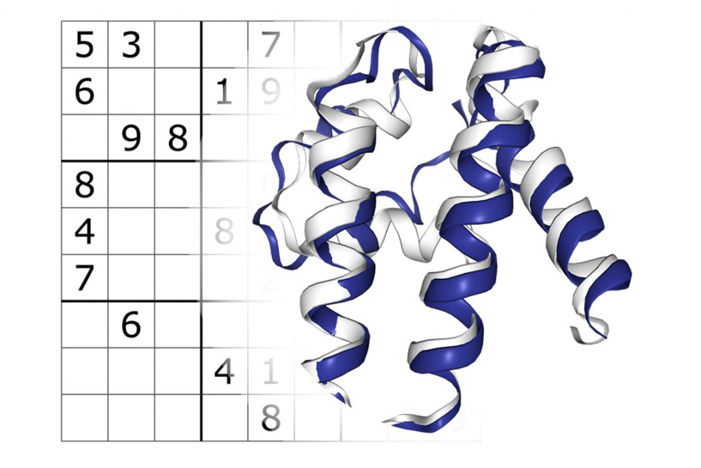 Sudoku-solving tactics can yield novel protein sequences that fold into predetermined geometrical structures (image courtesy of Alexey Strokach)