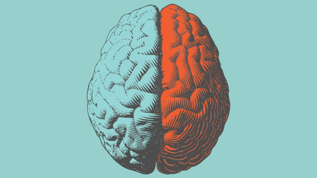 Illustration of a brain with the hemispheres coloured differently. Left hemisphere is light blue. Right hemisphere is red.